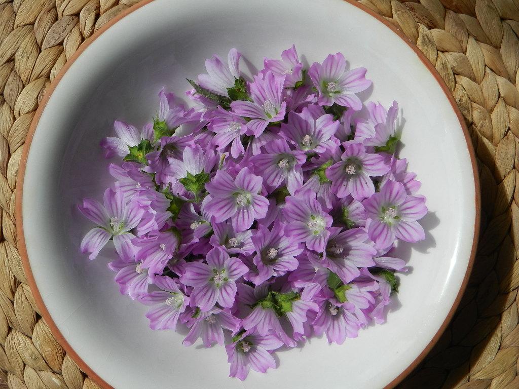 Malva planta comestible y medicinal el balcon verde - Infusion de malva ...