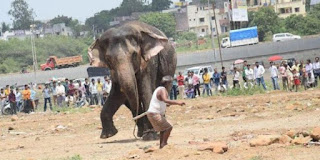 """Cerita Lucu Si Kabayan, Sayembara Lomba 17 Agustusan """"Ngangkat Suku Gajah"""""""