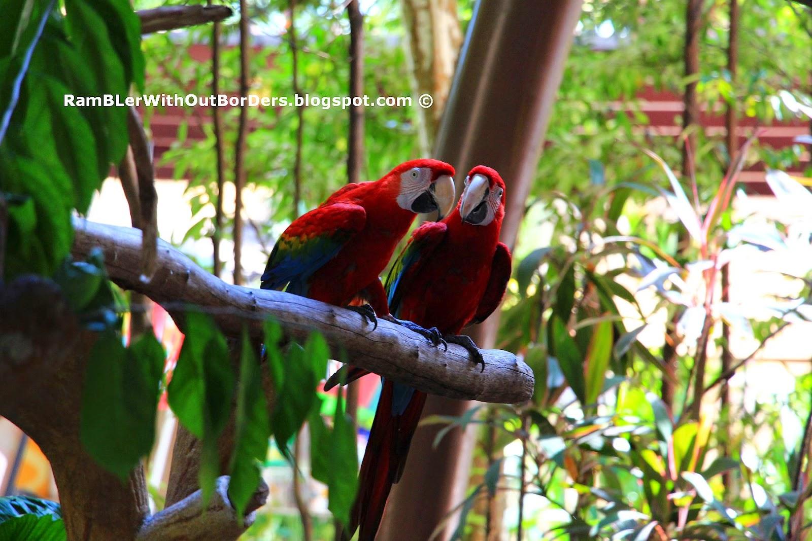 Scarlet Macaw, Jurong Bird Park, Singapore