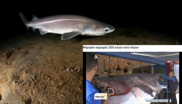 Καταγγελία της iSea για την παράνομη επίδειξη και πώληση προστατευόμενου καρχαρία