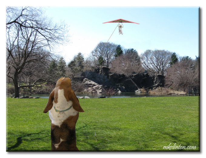 Basset Hound flying a kite with Westie copyright