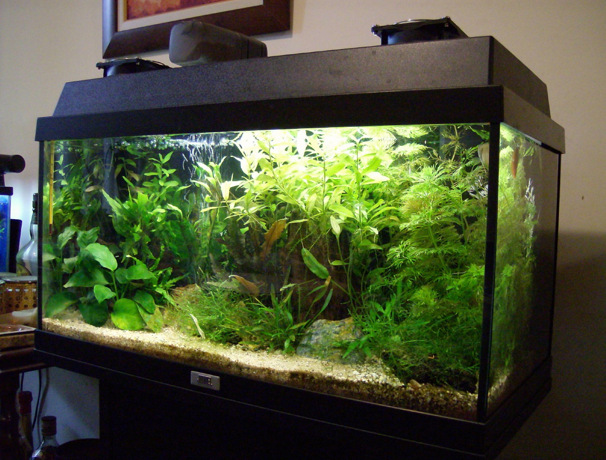 s c v  aquascaping ideas  small asian biotope