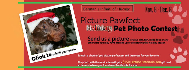 Infiniti Chicago Picture Pawfect Holiday Pet Photo Contest
