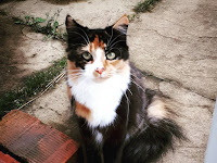 The Tortoiseshell Cat