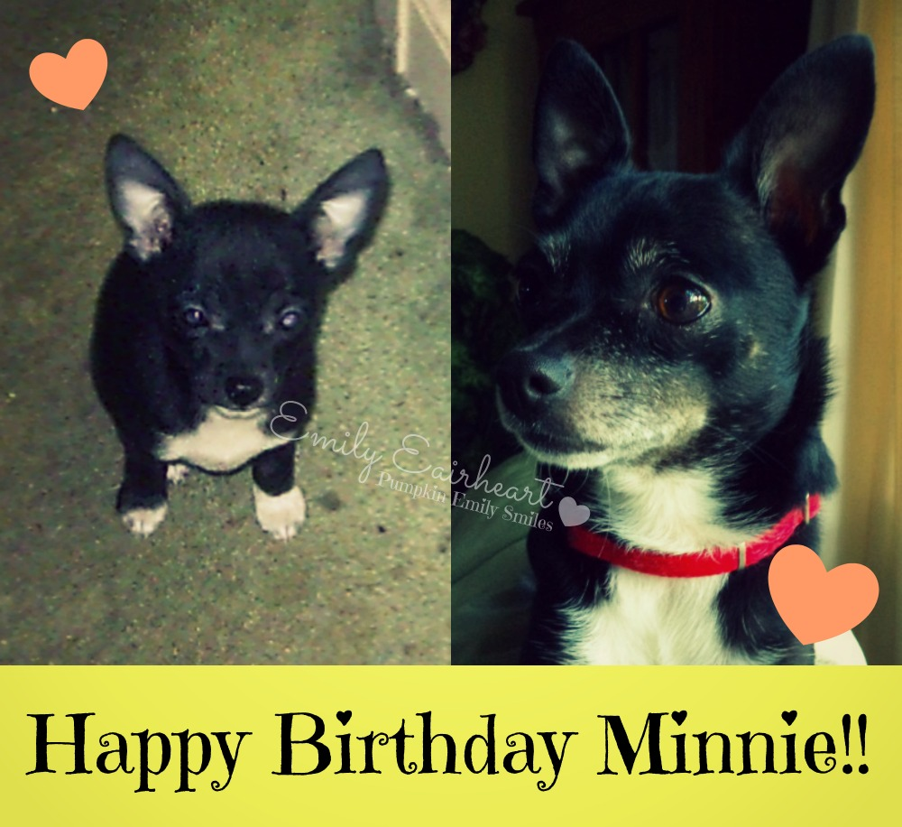 Minnie, Chihuahua puppy and at age four.