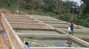concrete%2Bponds - Unawezaje Kutengeneza Bwawa la Kufugia Samaki?