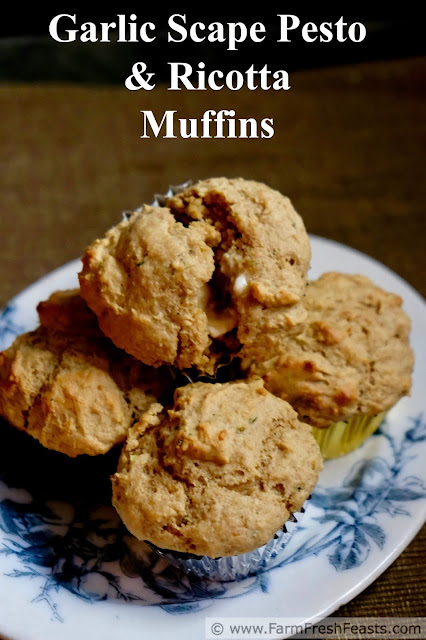 These savory muffins are flavored with garlic scape pesto & ricotta cheese. They bake up quickly for an easy bread to serve alongside pasta or chicken.