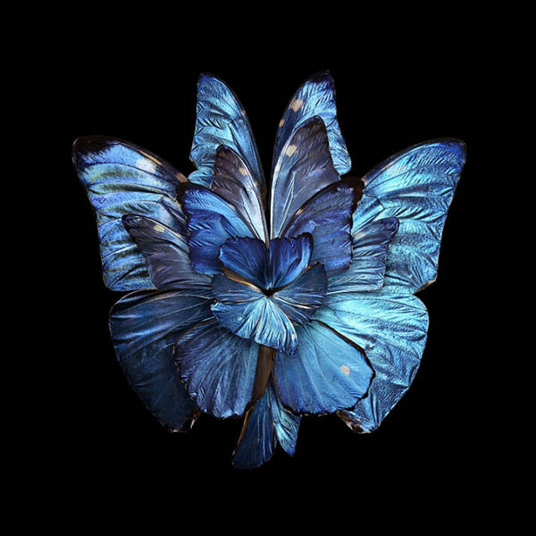 02-Seb-Janiak-Photographs-of-Butterfly-Wings-to-Resemble-Flowers-www-designstack-co