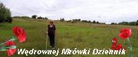 https://pogadajmyopeerelu.wordpress.com/2018/07/27/cos-pomalowalo-mi-swiat/