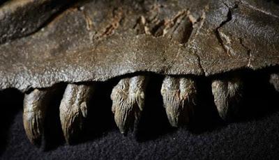 Paus Prasejarah Adalah Predator yang Ganas