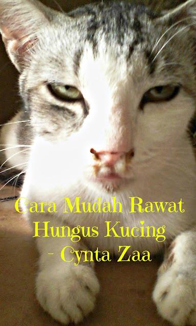Cara Mudah Rawat Selsema Kucing