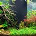 The Popular Freshwater Aquarium Plants