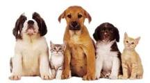 Pedigree Dog Food Online