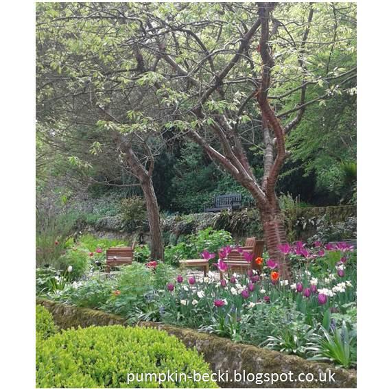 Prunus serrula tulips tower house