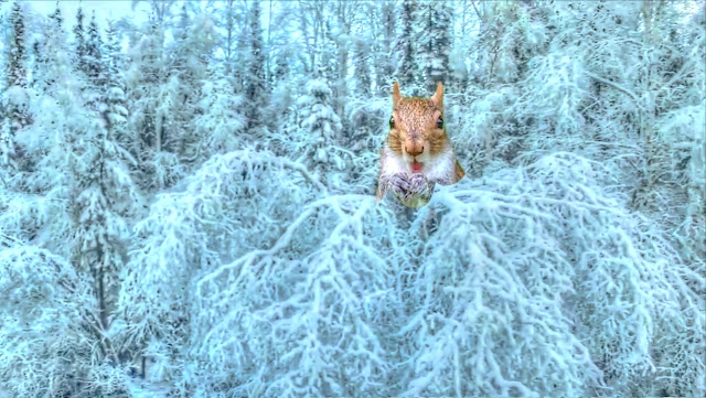 Video: Abominable Squirrels Discovered in Alaska - Exclusive Drone Footage
