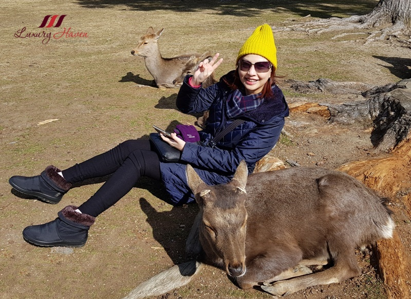 japan tourism board nara park singapore travel blogger