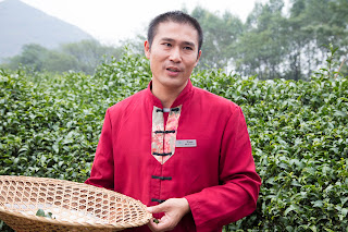 Kevin, a guide from Guilin's tea fields shows us how to pick tea by hand
