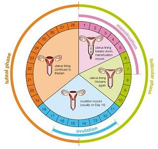 menstrual-period