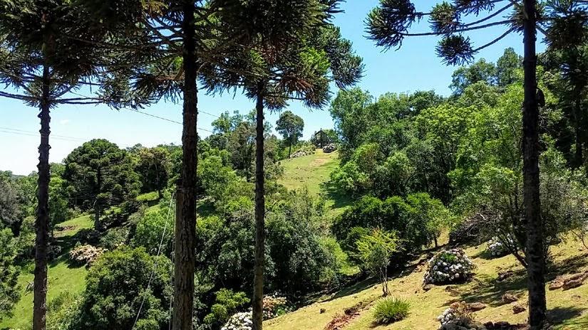 Bondinhos em Canela Parques da Serra: como ver a Cascata do Caracol