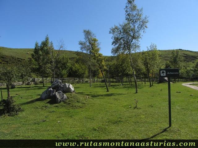 Ruta Lagos de Covadonga PR PNPE-2: Arboreto