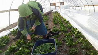 Ahavah Farm - Local  Sustainable  Pure