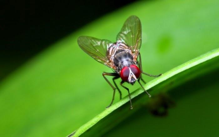 Διαβάστε τους 5 απλούς τρόπους για να απαλλαγείτε για πάντα από τις μύγες