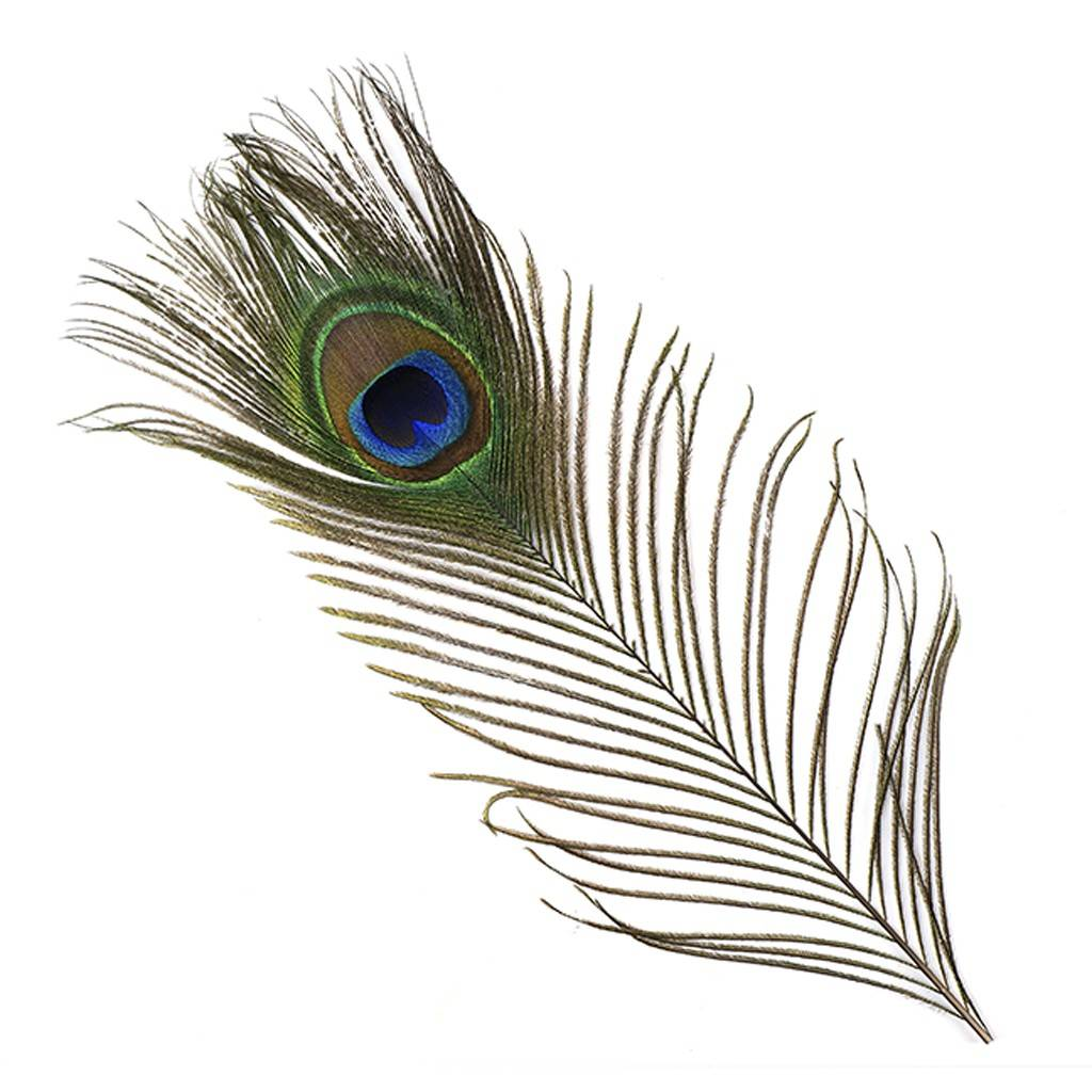 Findingtheone march 2018 the peacock is a highly regarded symbol in buddhism representing equanimity calmness and self control accordingly the peacock also represents an biocorpaavc Gallery