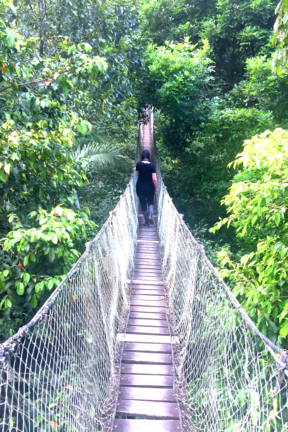 Treetop canopy at the Inkaterra Reserva Amazonica Lodge, Peru - travel & lifestyle blog