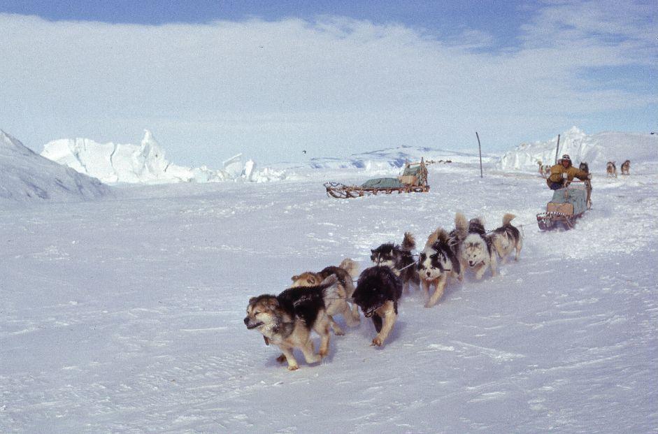 Dog Sledding Nz North Island