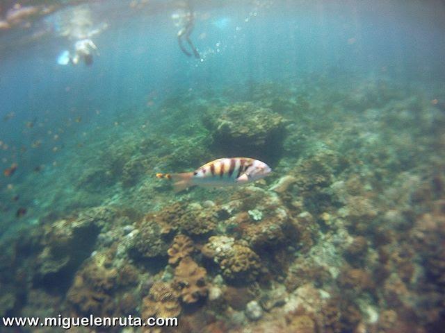 Snorkel-corrientes-Nusa-Penida