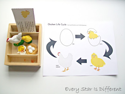 Life Cycle of a Chicken Activity with Printable