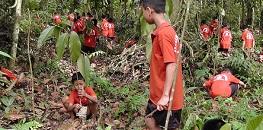 Short Paragraph on Tree Plantation