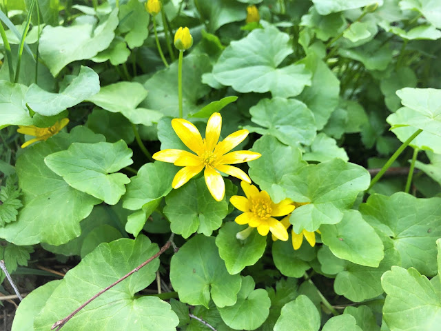 kevään väri keltainen
