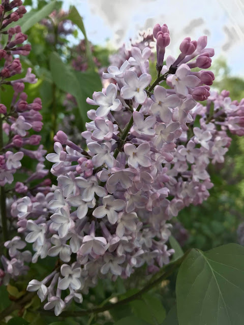 Den blommande trädgården och nya trädgårdsmöbler