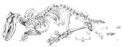 miocene mammals