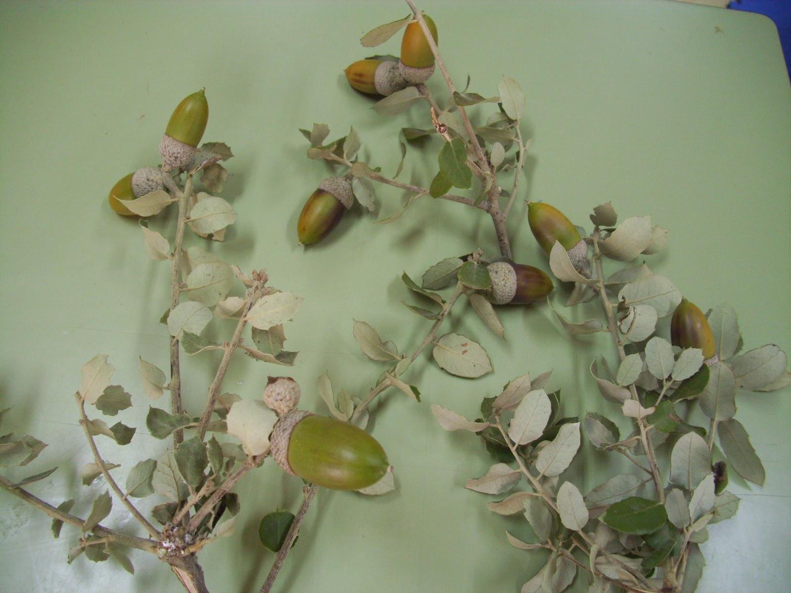 El Arbol De Los Frutos Para NiÑos: CHIRIBITAS: Octubre 2011