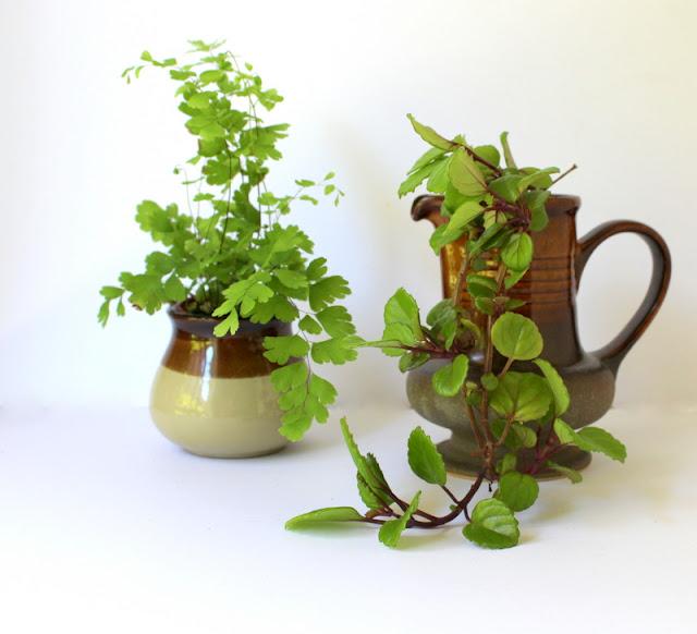 Indoor plants displayed in ceramic planters
