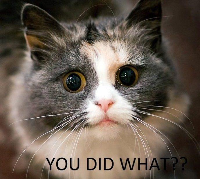 2 Cute Animal Pics: Very Sad Looking Kitty