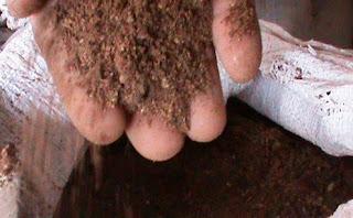 Bungkil inti kelapa sawit untuk pakan ternak