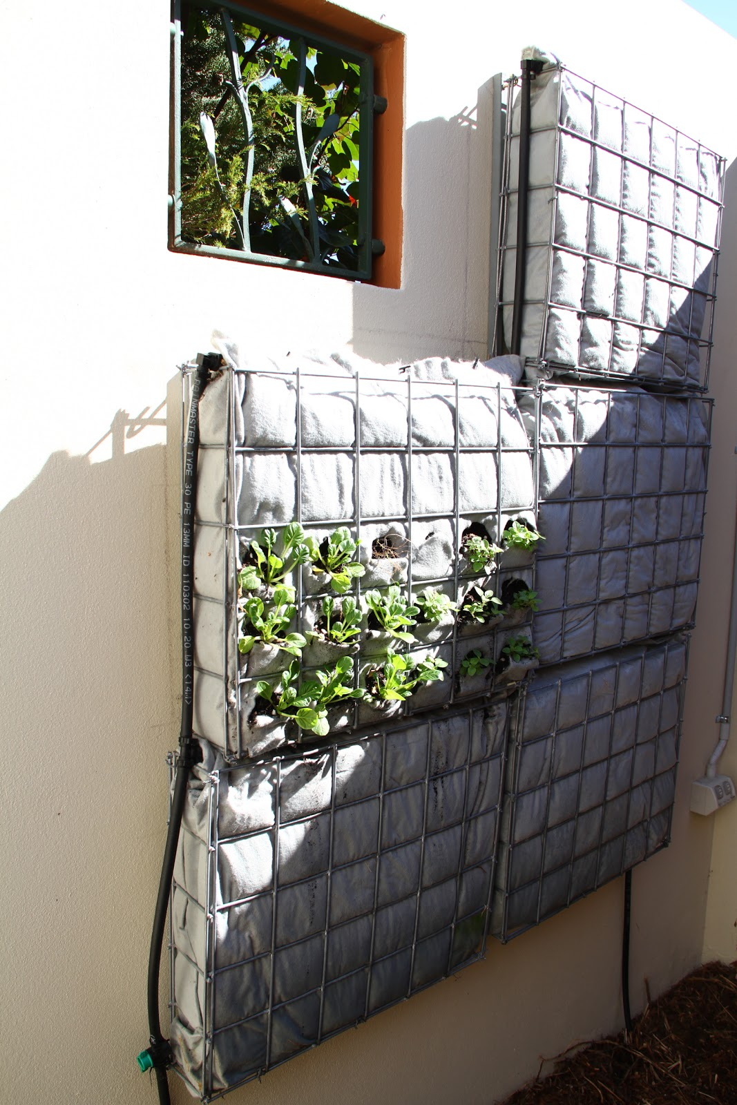 Frame This: DIY Vertical Garden
