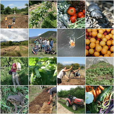 The Polyculture Market Garden Study - Results from Year 3 - 2017