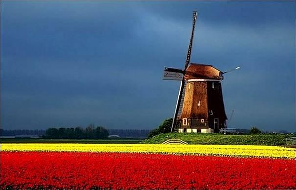 مزارع الزهور image013-766861.jpg