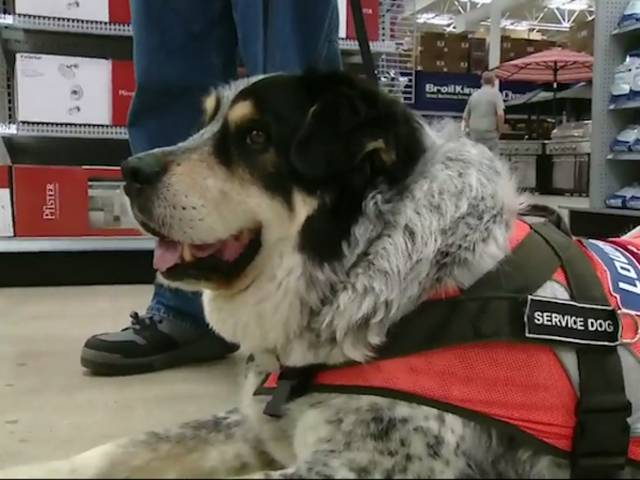 Hardware Store Hires A Man And His Service Dog In Canada (8 Pics)