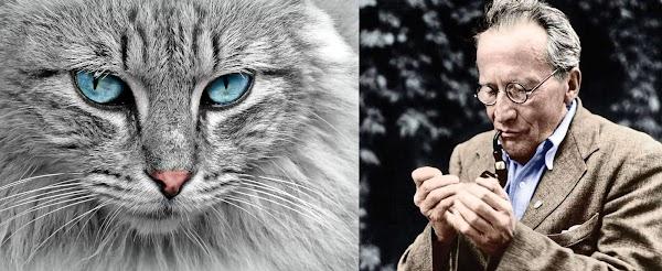 El gato de Schrödinger: una nueva versión.