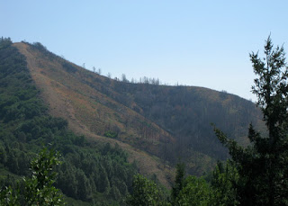 Scorched slopes of Loma Prieta, Santa Cruz County, California