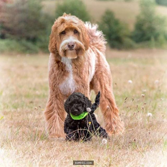 """Tình bạn giữa chú chó và cậu chủ nhỏ """"đốn gục"""" trái tim hàng nghìn dân mạng"""