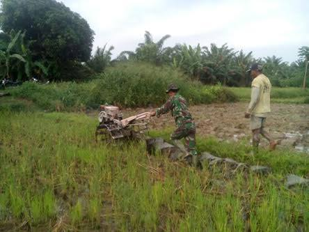 Bersama Petani, Serda Sumedi  Lakukan Pengolahan Sawah di Desa Sipare-Pare