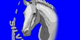 Lowongan Kerja Silver Horse Travel