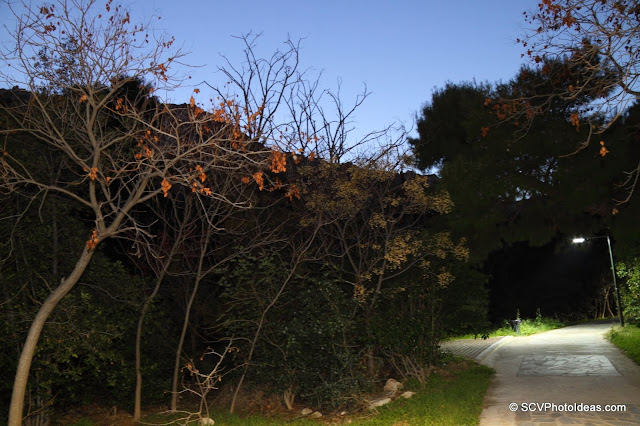 NIghtfall in the park - flash over tree branches
