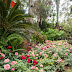 Vương quốc hoa hồng quý đầu tiên sắp xuất hiện tại Flamingo Đại Lải